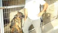 Yeni Düzen Gazetesi – İrma Köpek Çiftliği-Serhatköy