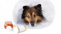 Köpeklerde Hastalıklara Giriş