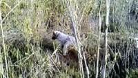 Seter'in tavşana ferması