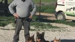 Temel itaat eğitimindeki köpeklerimizle çalışırken